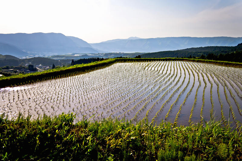 Epic Terraced Rice Field Landscape In Japan Stock Image