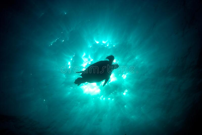Epic underwater photo of a green sea turtle silhouette against t stock photos