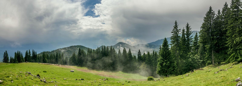Epicka halna sceneria z niebieskim niebem, sosny i mgła fotografia royalty free