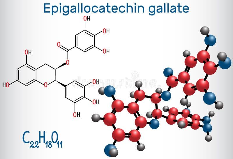 Epigallocatechin gallate EGCG, jest obfitym katechiną ja ilustracja wektor