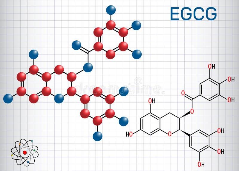 Epigallocatechin gallate EGCG, jest obfitym katechiną ja ilustracji