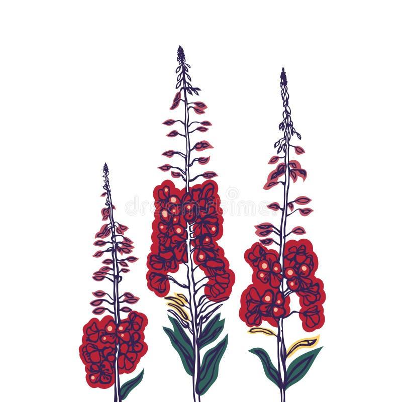 Epilobium angustifolium Epilobio wildflowers Raccolta delle erbe nella circostanza sbocciante Bevanda russa tradizionale, tè Herb royalty illustrazione gratis