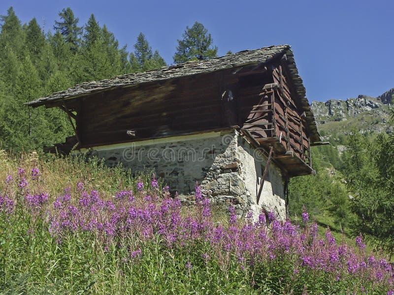 Epilobium angustifolium and idyllic hut royalty free stock image