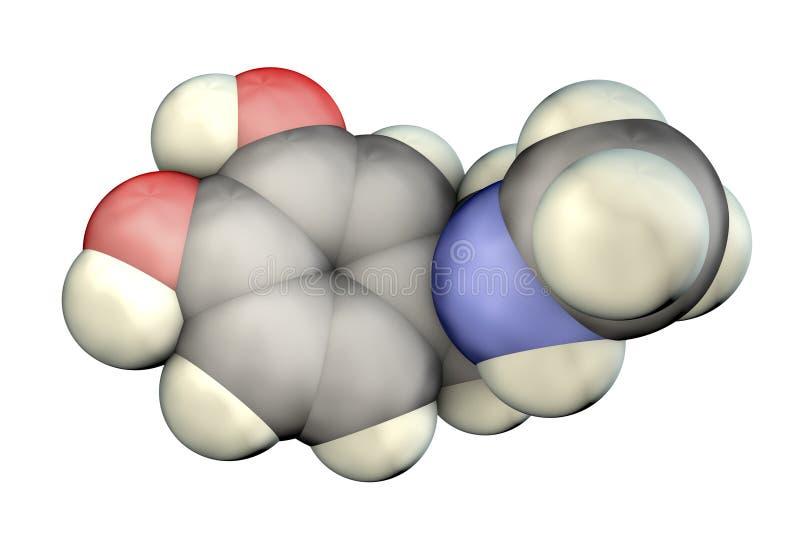 Epinefrinemolecule, een hormoon door bijnier wordt geproduceerd die vector illustratie