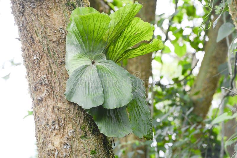 Epiphyte растя на хоботе стоковая фотография