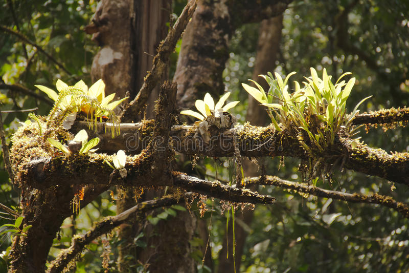 Epiphytes royaltyfria bilder