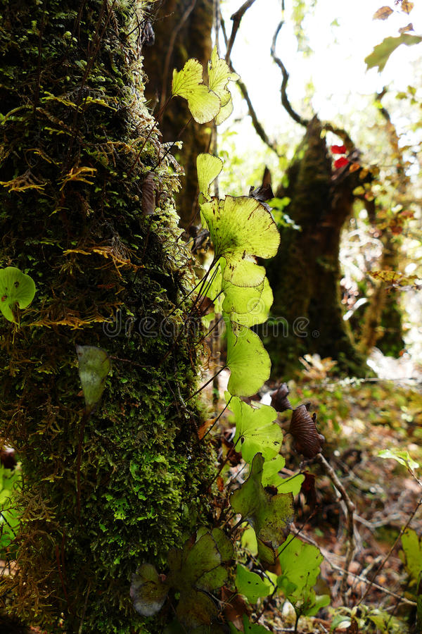 Epiphytes Growing On A Tree In The Rainforest Stock Image