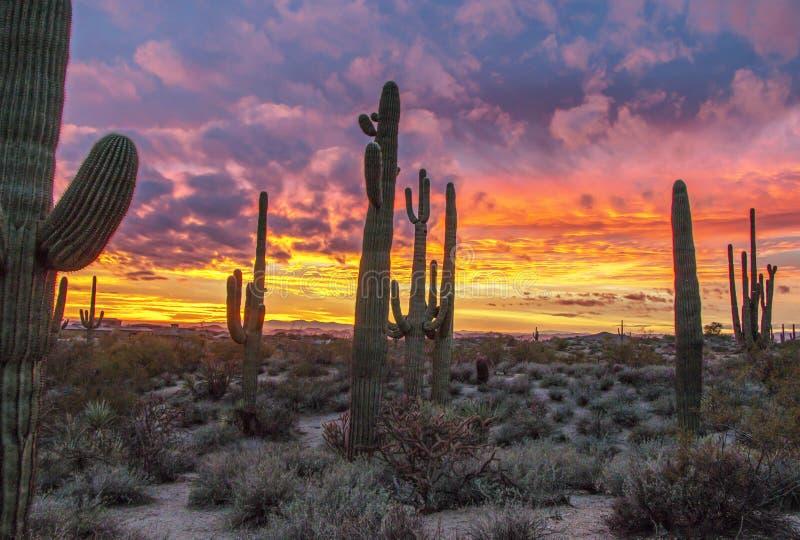 Epischer Wüsten-Sonnenuntergang mit Kaktus in Bereich Phoenix AZ lizenzfreie stockfotografie