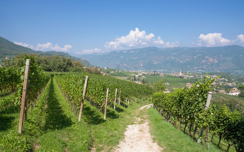 Eppan, południowa Tyrolean wino trasa, Włochy zdjęcia royalty free