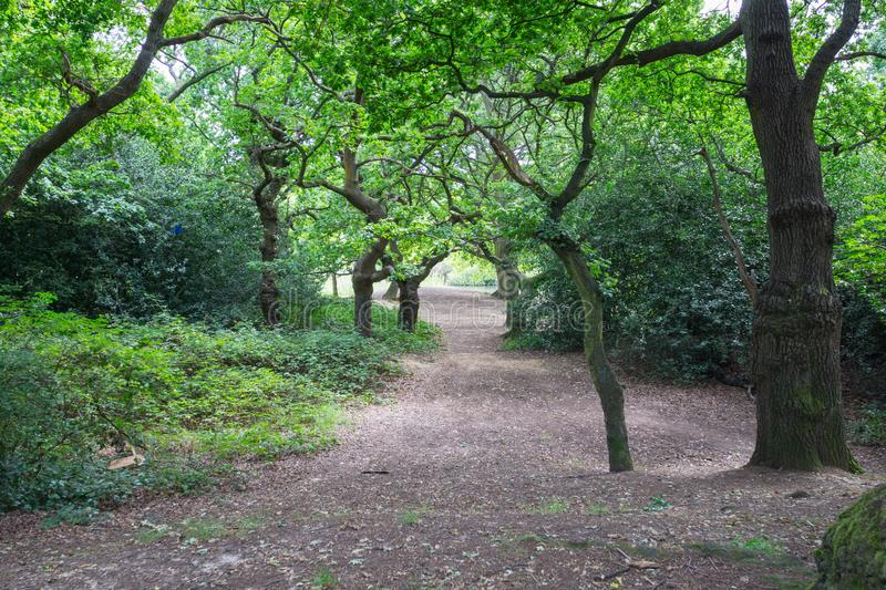 Epping Forest walks and trees royalty free stock photos