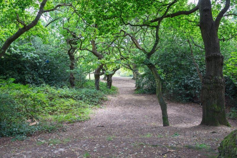 Epping lasu drzewa i spacery zdjęcia royalty free