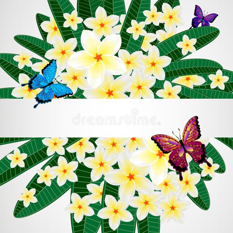 Eps10 Bloemenontwerpachtergrond Plumeriabloemen met vlinders stock illustratie