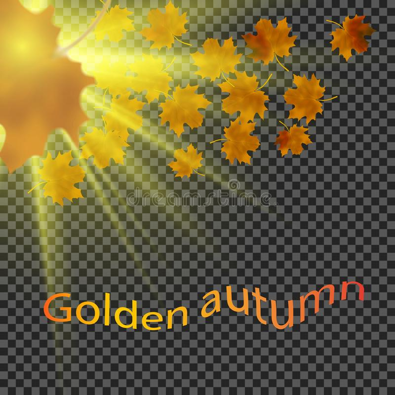 Yellow leaves fall down in the sun. Transparent background. Eps10. Yellow leaves fall down in the sun. Transparent background stock illustration