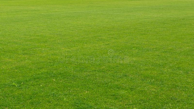 The equal green well-groomed lawn is accurately cut. / Summer day royalty free stock images