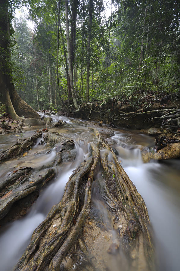 The equatorial forest with trees and bushes stock photography
