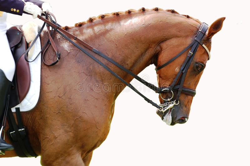 Equestre - cavallo di Dressage fotografie stock libere da diritti
