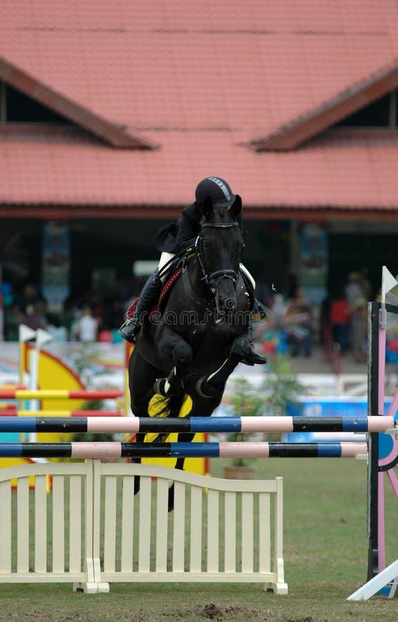 Equestrian stock photos