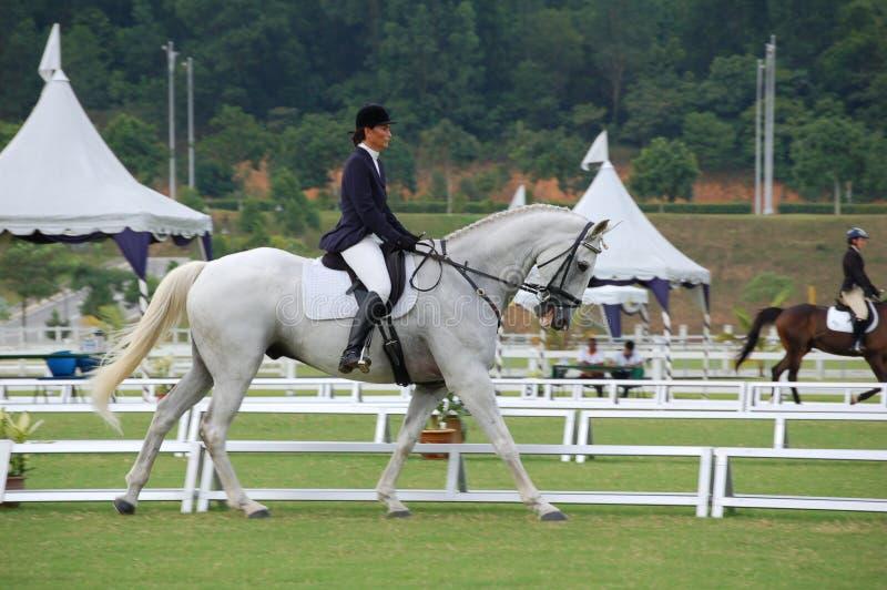 equestrian fotografia royalty free