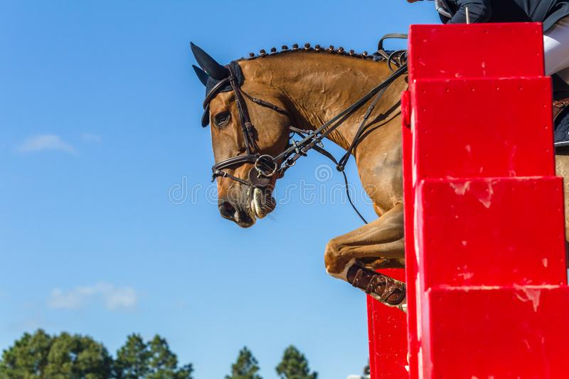 Jumping Horse Rider Closeup Action. Equestrian animal show jumping closeup action horse unidentified headless rider over poles in mid flight stock images