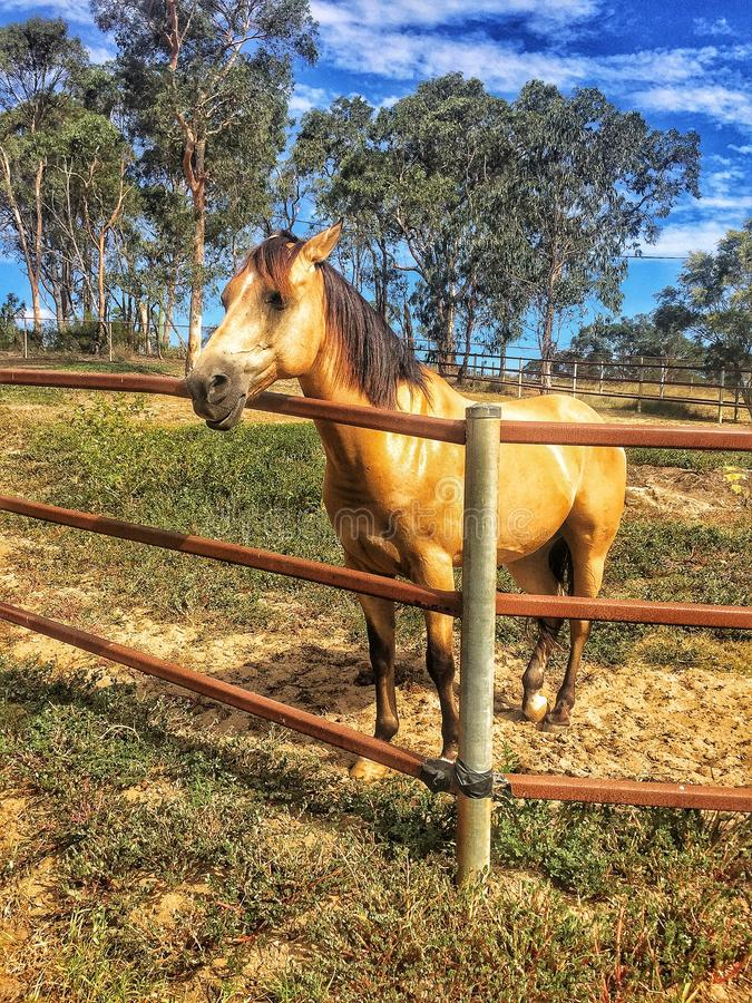 EQUESTRIAN CENTRE IN MALAYSIA royalty free stock photo