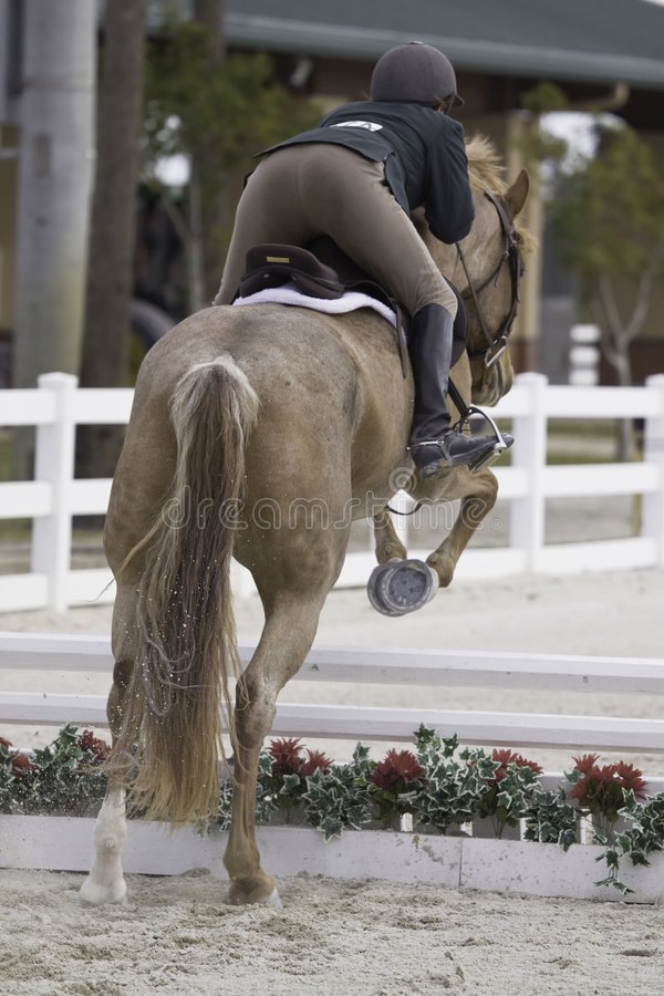 Equestrian Competition stock photo