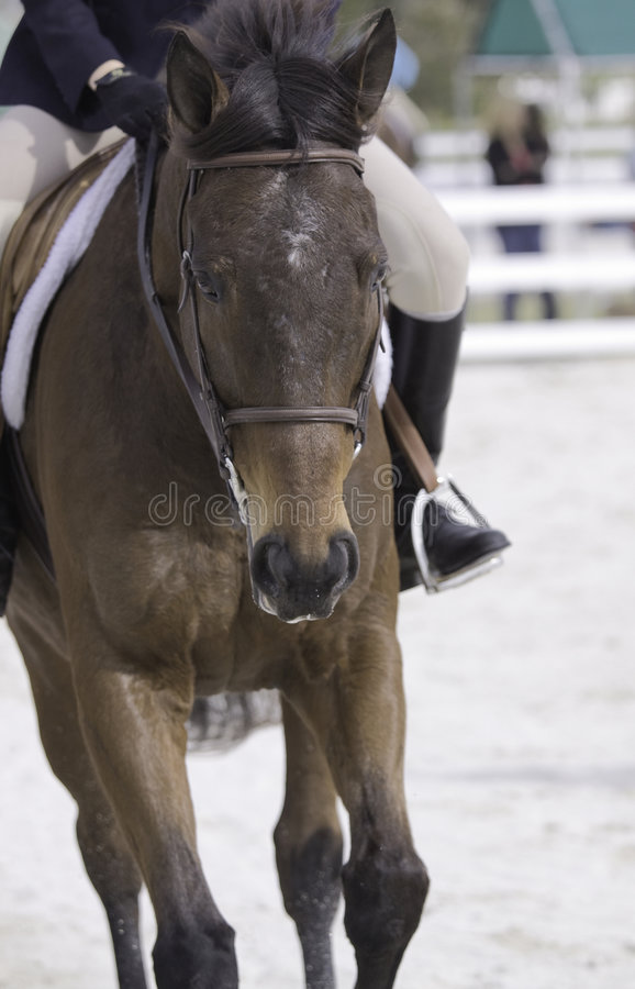 Equestrian Competition stock image