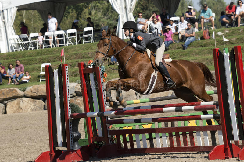Equestrian event - jumper. Picture of young rider and brown horse making a jump during competition at the bromont concours June 12, 2016 royalty free stock photo