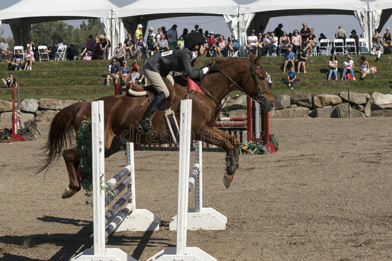 Equestrian event - jumper. Side view of rider and brown horse making a jump during competition at the bromont concours June 12, 2016 royalty free stock photography