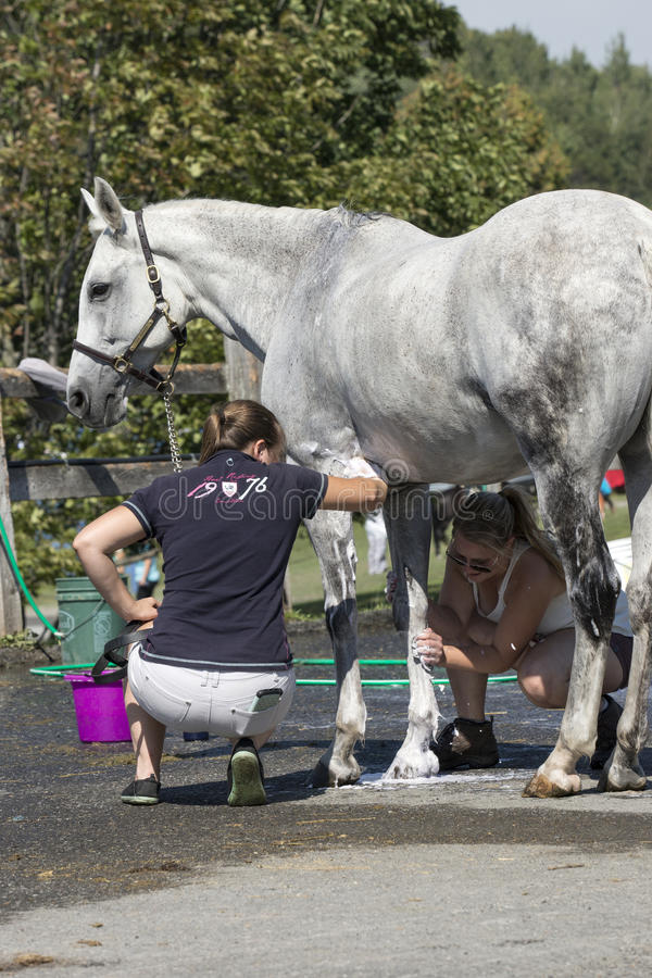 Equestrian event. Picture of two young woman washing the horse after competition at the bromont concours June 12, 2016 stock photo