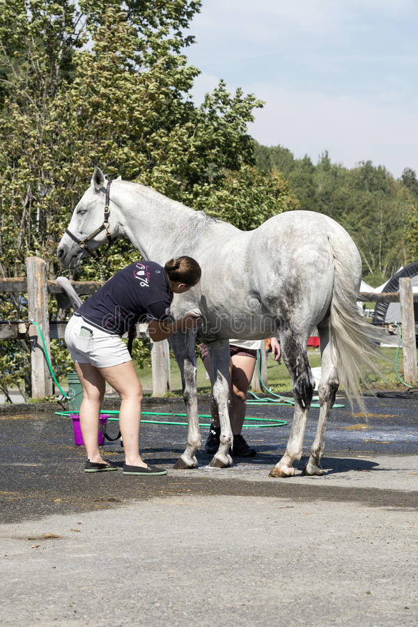 Equestrian event. Picture of young woman washing the horse after competition at the bromont concours June 12, 2016 stock photo