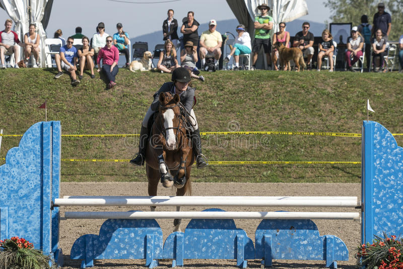 Equestrian - horse jumping. Front view of rider and brown horse making a jump during competition at the bromont concours June 12, 2016 royalty free stock images