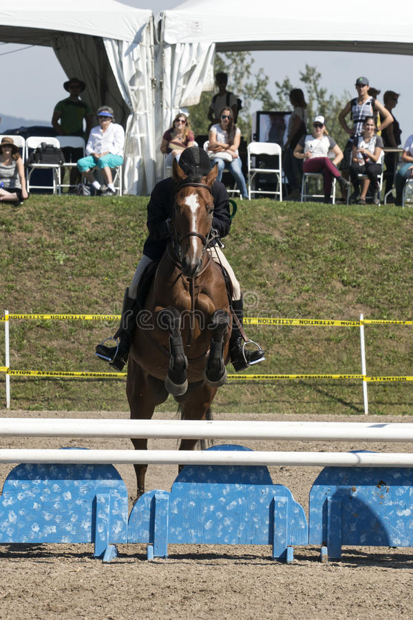 Equestrian - horse jumping. Front view of rider and brown horse making a jump during competition at the bromont concours June 12, 2016 stock photos