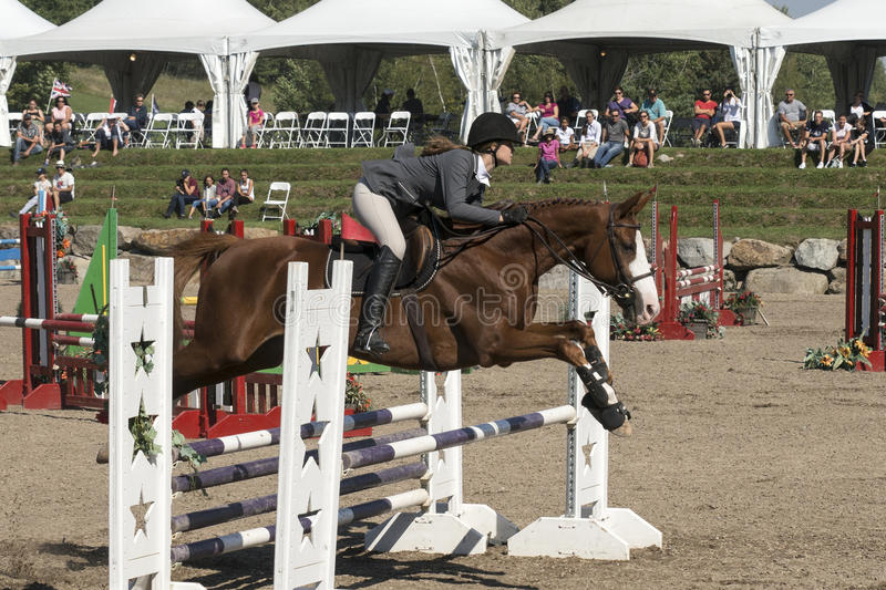Equestrian - horse jumping. Side view of rider and brown horse making a jump during competition at the bromont concours June 12, 2016 stock photo