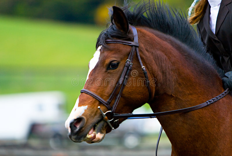 Equestrian. Horse and Rider. Rider and horse at an equestrian competition stock photography