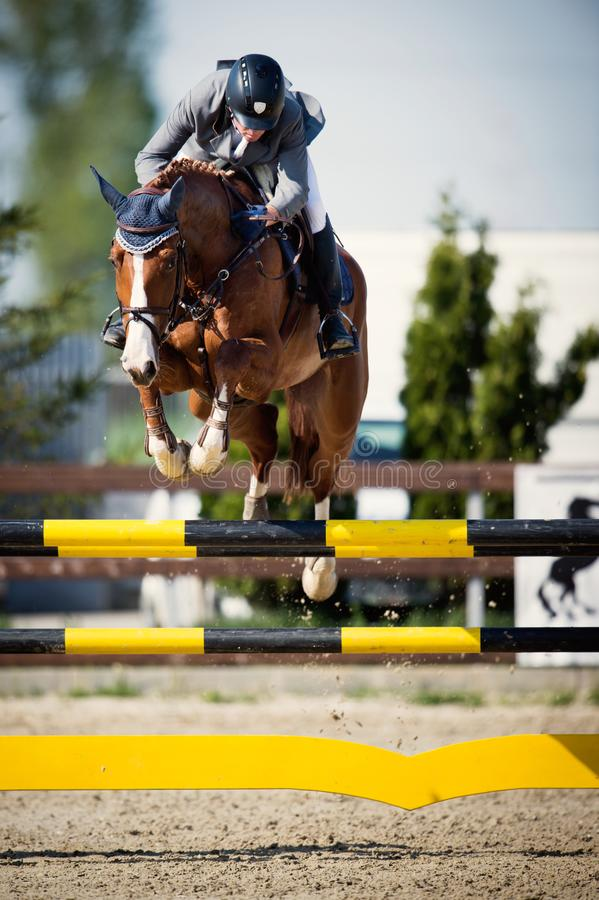 Free Equestrian Horse Rider Jumping.Picture Showing A Competitor Performing In Show Jumping Competition Stock Photo - 115655210