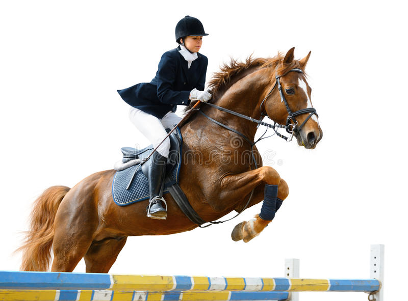Equestrian jumper. Young girl jumping with sorrel horse - isolated on white royalty free stock images