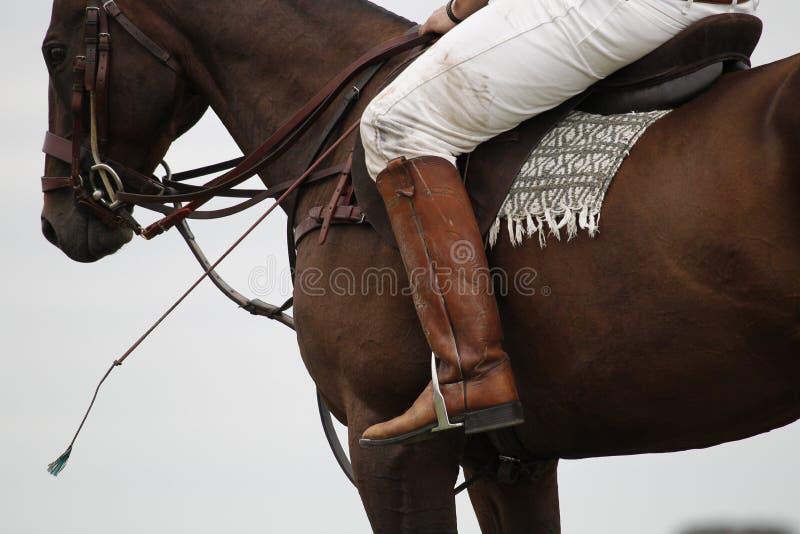 Equestrian royalty free stock photos