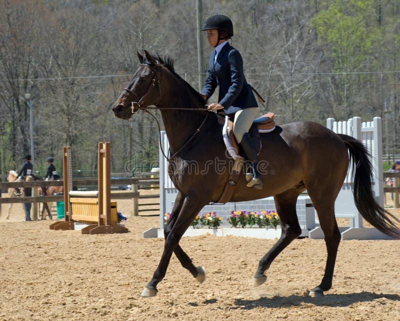 equestrian potomstwa obraz royalty free