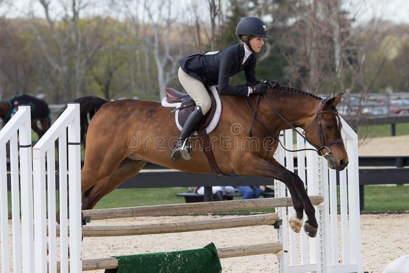 Equestrian przedstawienia doskakiwanie fotografia stock