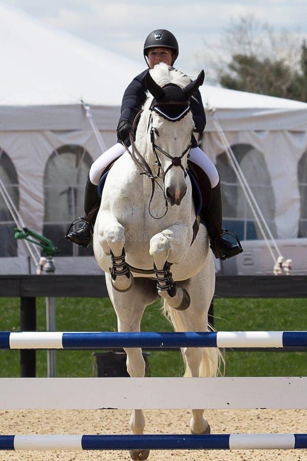 Equestrian przedstawienia doskakiwanie fotografia royalty free