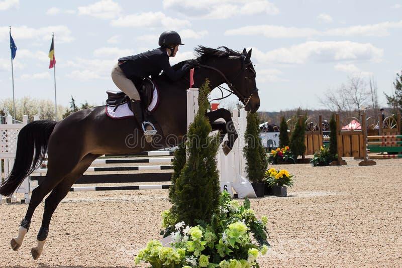 Equestrian przedstawienia doskakiwanie zdjęcie royalty free