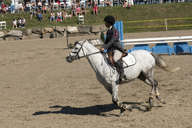 Equestrian show. Picture of rider and white horse in preparation to make a jump during competition at the bromont concours June 12, 2016 royalty free stock photography