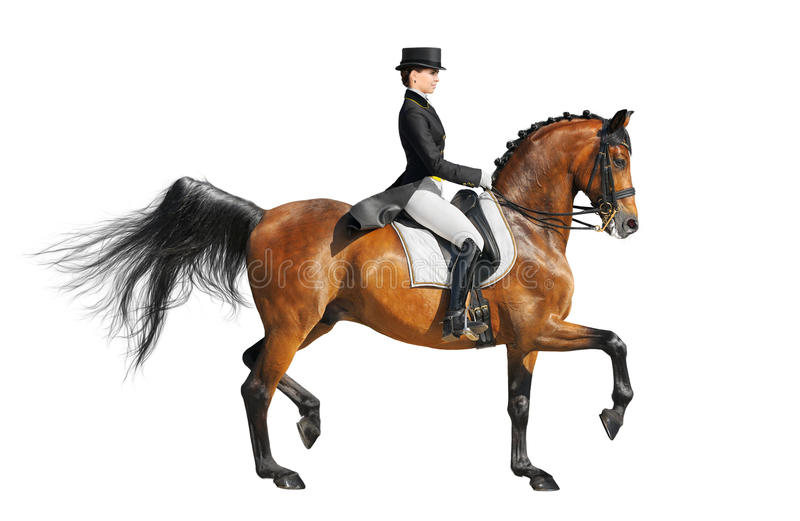 Equestrian sport - dressage. (isolated on white stock image