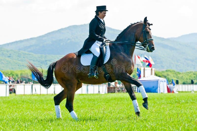 Download Equestrian Sport. Female Dressage Rider Editorial Photo - Image: 22021776