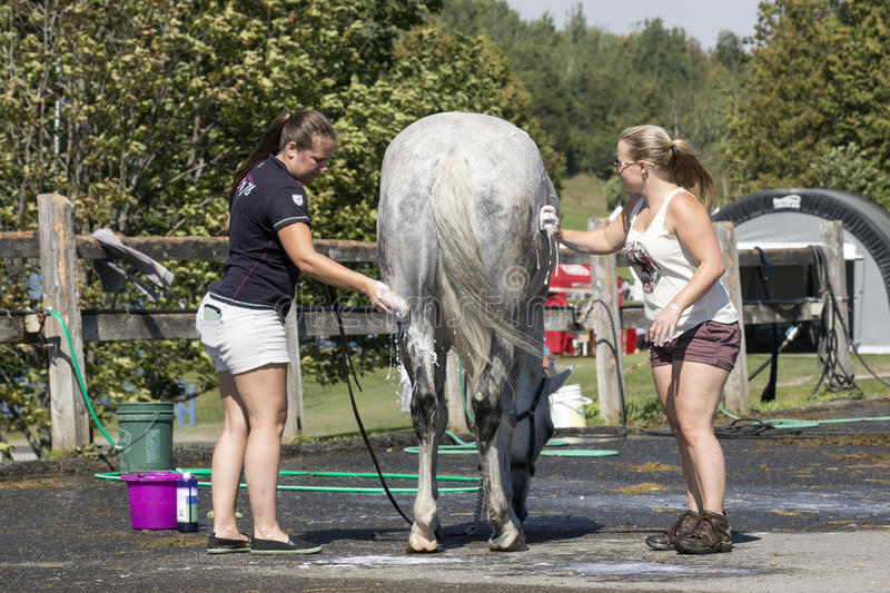 Equestrian sport. Picture of two young woman washing the horse after competition at the bromont concours June 12, 2016 royalty free stock image