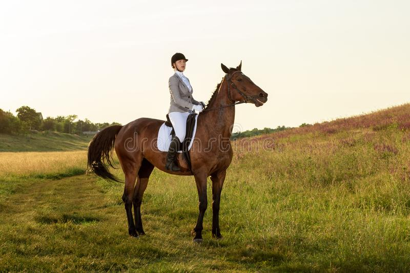 Equestrian sport. Young woman riding horse on dressage advanced test. Horse walk in summer royalty free stock image
