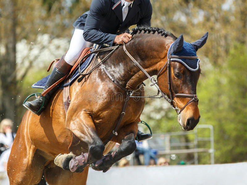 Equestrian Sports. Various, high quality and high resolution, equine themed photos stock image