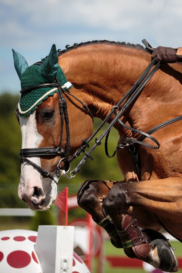 Equestrian sporty fotografia royalty free