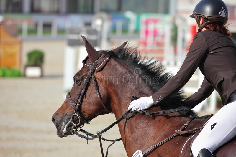 Young sportswoman taking her course on Show jumping training royalty free stock photography
