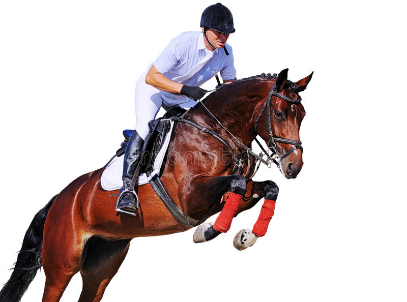 Equestrianism: rider in jumping show, isolated. On white background royalty free stock photography